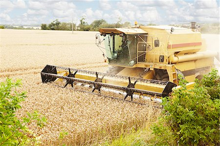 Thresher working in crop field Stock Photo - Premium Royalty-Free, Code: 649-06353307