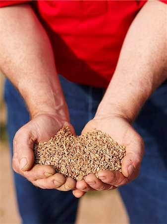Farmer holding handful of barley seeds Stock Photo - Premium Royalty-Free, Code: 649-06400462