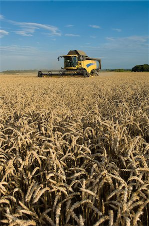 Harvester working in crop field Stock Photo - Premium Royalty-Free, Code: 649-06400717