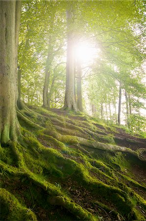 dreamy - Mossy tree roots on forest hillside Stock Photo - Premium Royalty-Free, Code: 649-06400891