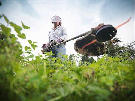 Man trimming weeds in garden Stock Photo - Premium Royalty-Free, Code: 649-06401009