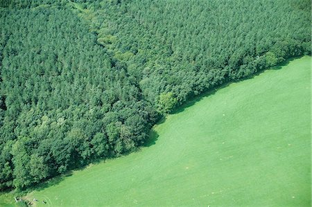Aerial view of forest and rural field Stock Photo - Premium Royalty-Free, Code: 649-06401191
