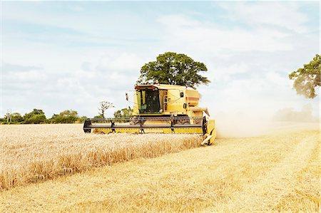 Tractor harvesting grains in crop field Stock Photo - Premium Royalty-Free, Code: 649-06401205
