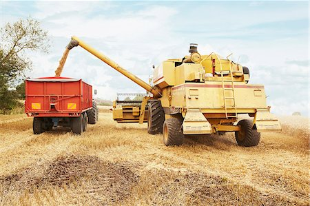Tractor harvesting grains in crop field Stock Photo - Premium Royalty-Free, Code: 649-06401207