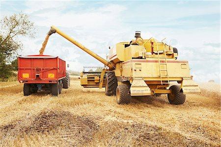 Tractor harvesting grains in crop field Stock Photo - Premium Royalty-Free, Code: 649-06401207