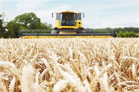 Harvester working in crop field Stock Photo - Premium Royalty-Free, Code: 649-06401237