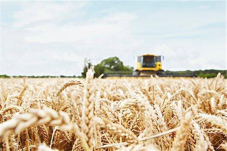 Harvester working in crop field Stock Photo - Premium Royalty-Free, Code: 649-06401238