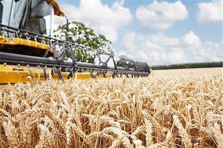 Harvester working in crop field Stock Photo - Premium Royalty-Free, Code: 649-06401239