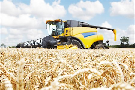 Harvester working in crop field Stock Photo - Premium Royalty-Free, Code: 649-06401244