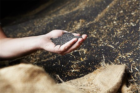 Hand scooping harvested grain Stock Photo - Premium Royalty-Free, Code: 649-06401247