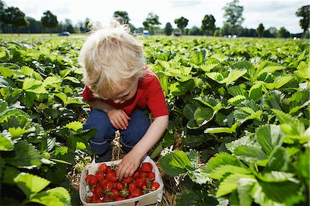 farm and boys - Boy picking strawberries in field Stock Photo - Premium Royalty-Free, Code: 649-06401298