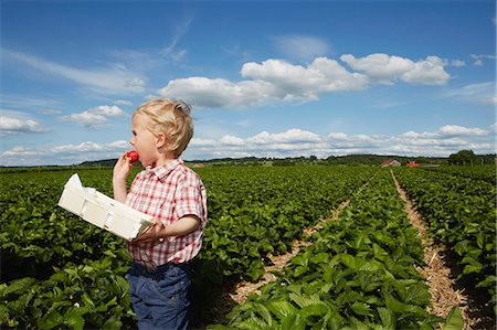 farm and boys - Boy eating strawberry in crop field Stock Photo - Premium Royalty-Free, Code: 649-06401290