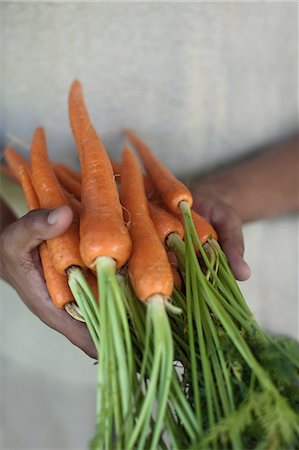 Close up of hands holding carrots Stock Photo - Premium Royalty-Free, Code: 649-06432399