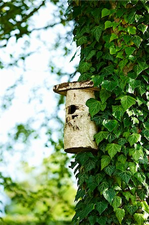 Birdhouse on ivy tree in backyard Stock Photo - Premium Royalty-Free, Code: 649-06432787