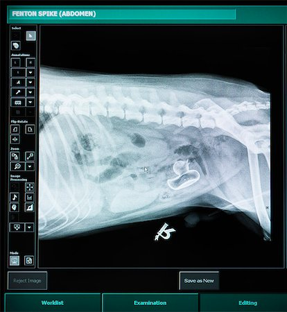 dog x-ray - X-ray of dog with swallowed plastic duck Stock Photo - Premium Royalty-Free, Code: 649-06433010
