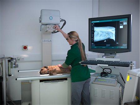 dog x-ray - Veterinary nurse taking x-ray of dog Stock Photo - Premium Royalty-Free, Code: 649-06433012