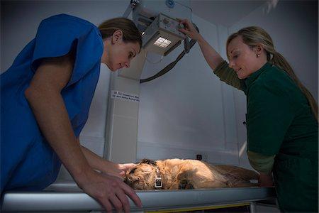 dog x-ray - Veterinarian getting x-rays of dog Stock Photo - Premium Royalty-Free, Code: 649-06433051