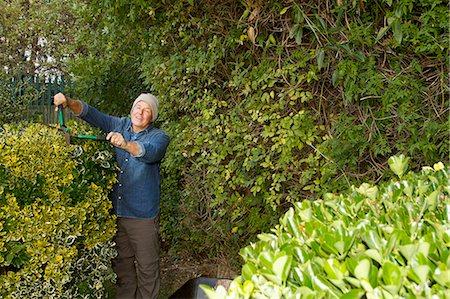 Older man trimming hedges in garden Stock Photo - Premium Royalty-Free, Code: 649-06489105