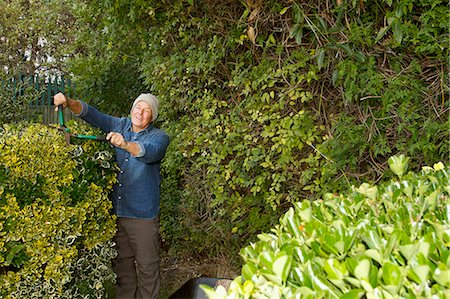 Older man trimming hedges in garden Stock Photo - Premium Royalty-Free, Code: 649-06489105