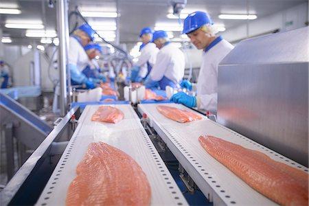 Fish filets on conveyor belt in factory Stock Photo - Premium Royalty-Free, Code: 649-06533461
