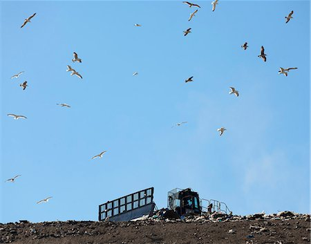flying bird - Birds flying over landfill Stock Photo - Premium Royalty-Free, Code: 649-06533600