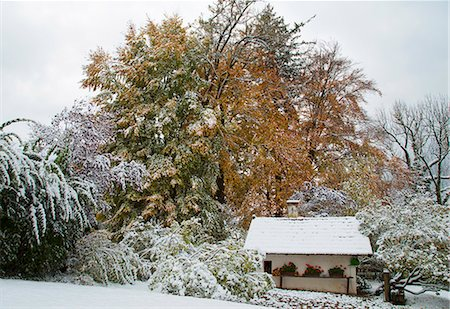 snow covered trees - House and trees in snowy landscape Stock Photo - Premium Royalty-Free, Code: 649-06622339