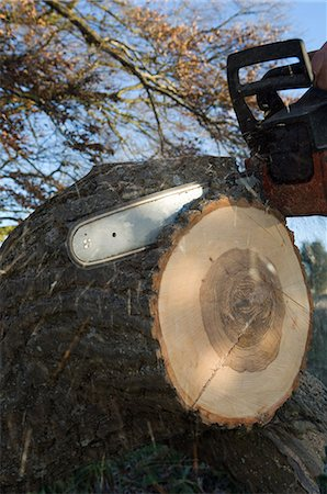 Close up of chainsaw cutting log Stock Photo - Premium Royalty-Free, Code: 649-06622380