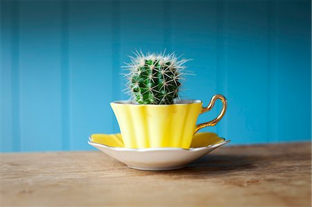 Cactus growing in teacup on desk Stock Photo - Premium Royalty-Free, Code: 649-06717482