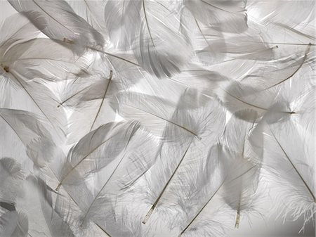 feather  close-up - White feathers Stock Photo - Premium Royalty-Free, Code: 649-06812522