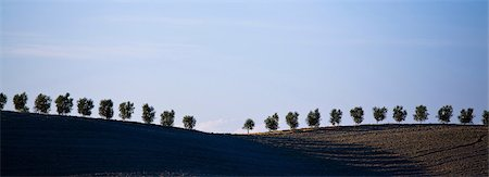 repeating - Panoramic of ploughed fields and cypress trees, Tuscany, Italy Stock Photo - Premium Royalty-Free, Code: 649-06829888