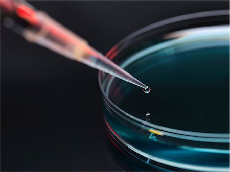 Sample being pipetted into petri dish for analysis in laboratory Stock Photo - Premium Royalty-Free, Code: 649-06844075