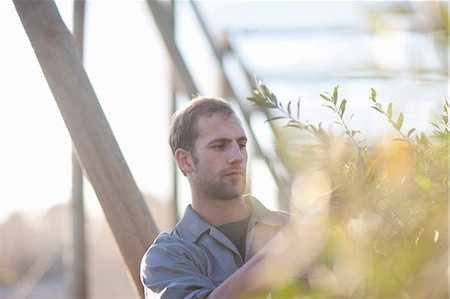 Young man working with plants Stock Photo - Premium Royalty-Free, Code: 649-06844200