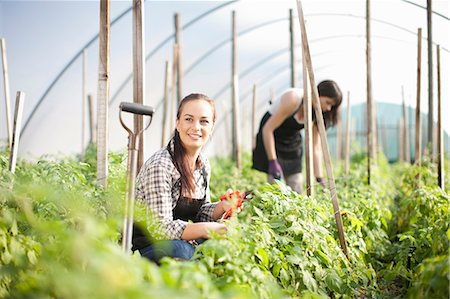 farmhand (female) - Young woman working at vegetable farm Stock Photo - Premium Royalty-Free, Code: 649-06844236