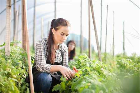 Young woman working at vegetable farm Stock Photo - Premium Royalty-Free, Code: 649-06844237