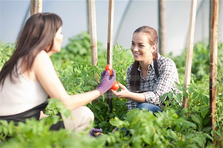 farmhand (female) - Women working at vegetable farm, holding tomatoes Stock Photo - Premium Royalty-Free, Code: 649-06844241