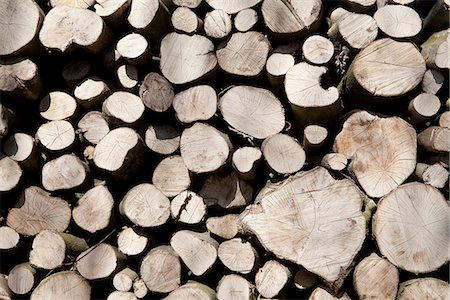 supply - A stack of cut timber Stock Photo - Premium Royalty-Free, Code: 649-06844896