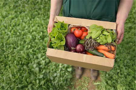 Farmer carrying organic vegetables in box for delivery, close up Stock Photo - Premium Royalty-Free, Code: 649-06845112