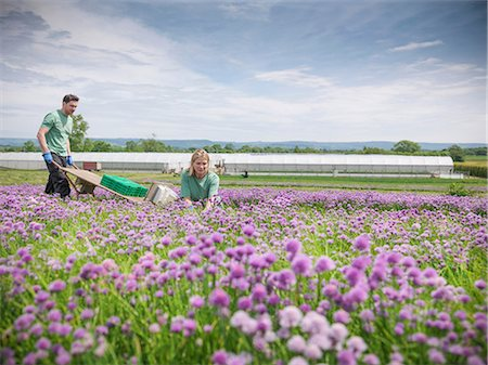 flowers - Workers picking fresh chives Stock Photo - Premium Royalty-Free, Code: 649-07064597