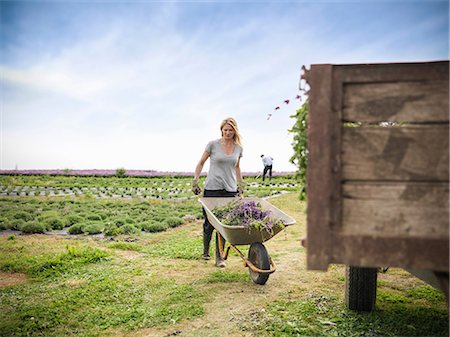 farmhand (female) - Worker pushing wheelbarrow Stock Photo - Premium Royalty-Free, Code: 649-07064614