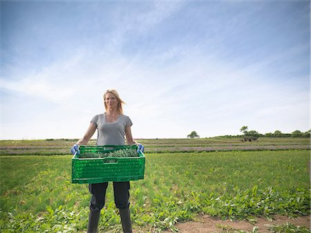 farmhand (female) - Woman carrying crate of chives Stock Photo - Premium Royalty-Free, Code: 649-07064616