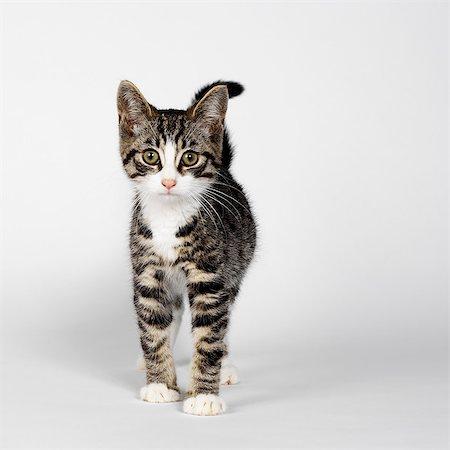 Portrait of striped kitten Stock Photo - Premium Royalty-Free, Code: 649-07065254