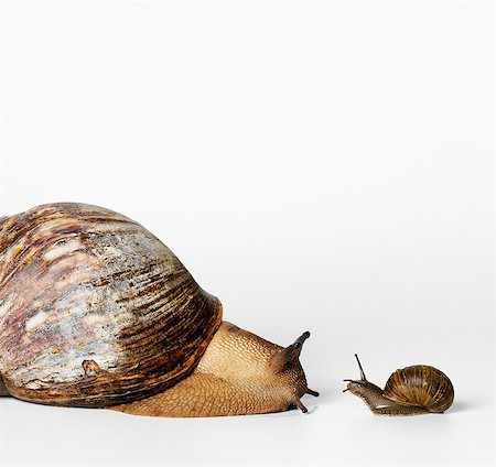 small - Little and Big Snails Stock Photo - Premium Royalty-Free, Code: 649-07065304