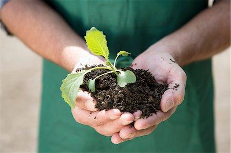 Close up of organic farmer holding seedling Stock Photo - Premium Royalty-Free, Code: 649-07063424
