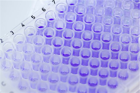 dyed - Close up of 96-well microtiter plate with crystal violet solution to examine toxicity Stock Photo - Premium Royalty-Free, Code: 649-07118788