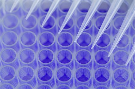 dyed - Close up of 96-well microtiter plate with crystal violet solution to examine toxicity Stock Photo - Premium Royalty-Free, Code: 649-07118789