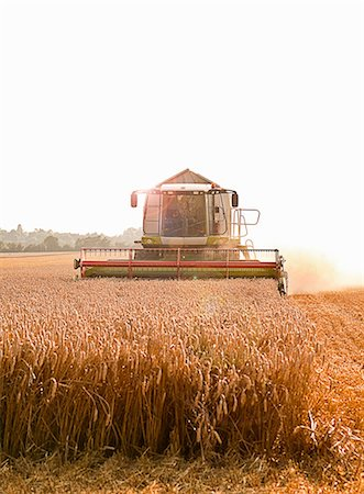 Combine harvester in field, Devon, England, UK Stock Photo - Premium Royalty-Free, Code: 649-07119682