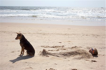 Boy buried in sand on beach with dog Stock Photo - Premium Royalty-Free, Code: 649-07119742