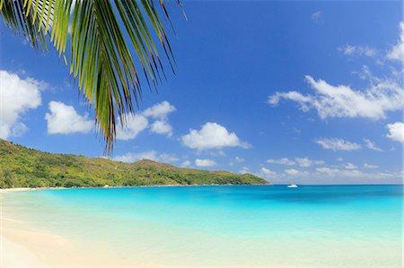 palm - Palm leaf and beach, Praslin Island, Seychelles Stock Photo - Premium Royalty-Free, Code: 649-07239208