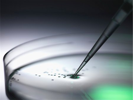 Pipetting samples into petri dish used in dna, stem cell, biomedical, biotechnology and pharma research Stock Photo - Premium Royalty-Free, Code: 649-07279556