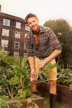 Mid adult man harvesting salad leaf on council estate allotment Foto de stock - Royalty Free Premium, Número: 649-07280541